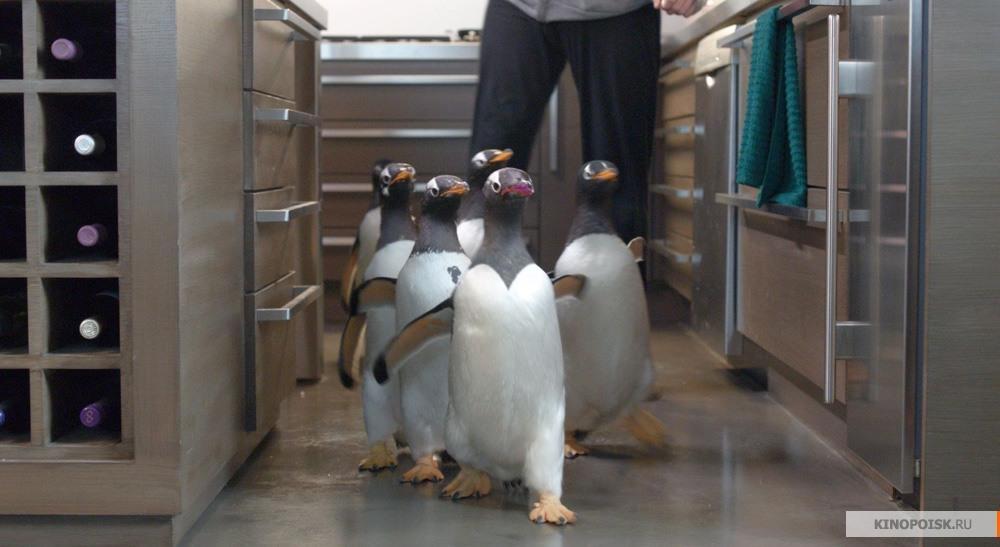 кадры пингвины мистера поппера