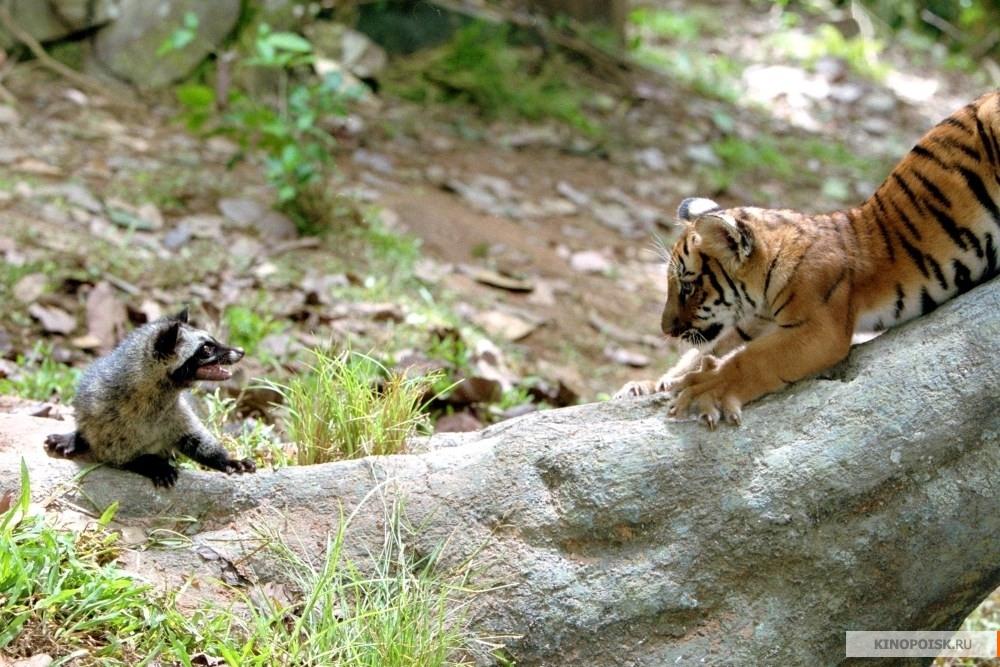 Песня про тигра про тебя брат скачать