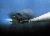 Фото: Акулы 3: Мегалодон. все фото.
