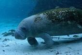 "Кадр 2 из фильма  ""Дельфины и киты 3D "" /Dolphins and Whales 3D: Tribes of..."