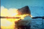 Мифы про акул - что ложь, а что правда.  Разрушители легенд неоднократно в