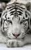 скачать фильм бесплатно белый тигр зеленый дракон видео